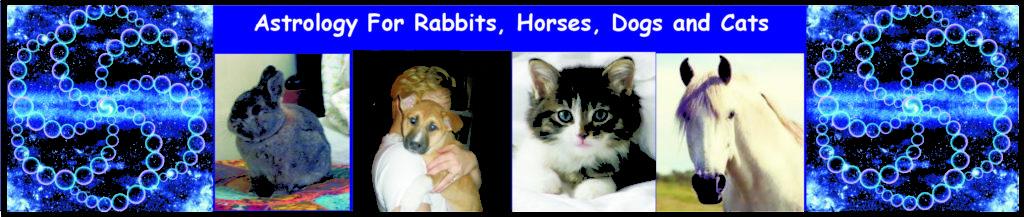 animals-header